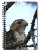Red-tailed Hawk - Young And The Old Spiral Notebook