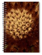 Red Tips Spiral Notebook