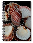 Red-toned Seashells Spiral Notebook