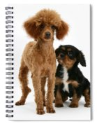 Red Toy Poodle And Cavalier King Spiral Notebook