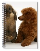 Red Toy Poodle Pup With A Lionhead Spiral Notebook
