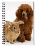 Red Toy Poodle Pup With Lionhead-cross Spiral Notebook