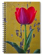 Red Tulip With Yellow Wall Spiral Notebook