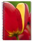 Red Tulips 1 Spiral Notebook