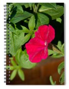 Red Velvet Petunia Spiral Notebook
