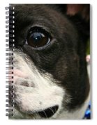 Red White And Boston Spiral Notebook