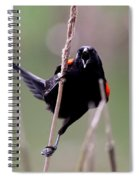 Red-winged Blackbird - Can You Hear Me Now Spiral Notebook