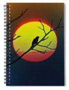 Red Winged Blackbird In The Sun Spiral Notebook