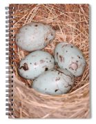 Red-winged Blackbird Nest Spiral Notebook