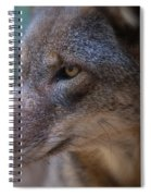 Red Wolf Stare Spiral Notebook