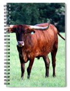 Reddish Brown Longhorn Spiral Notebook