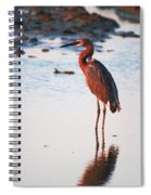 Reddish Egret Basking In The Sunset Spiral Notebook
