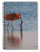 Reddish Egret Checking It Out Spiral Notebook