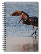 Reddish Egret Doing A Forging Dance Spiral Notebook