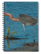 Reddish Egret Hunting Spiral Notebook