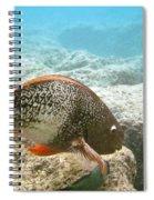 Redlip Parrotfish Spiral Notebook