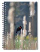 Redwinged Blackbird Spiral Notebook