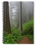Redwood Path Spiral Notebook