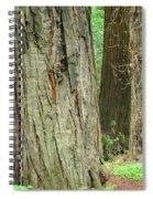 Redwood Trees Art Prints Big California Redwoods Spiral Notebook