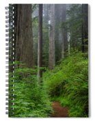 Redwoods Along Ossagon Trail Spiral Notebook
