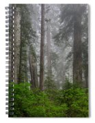 Redwoods In Breaking Mists Spiral Notebook