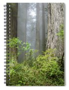 Redwoods In May Spiral Notebook
