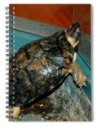 Reflecting Turtle Spiral Notebook
