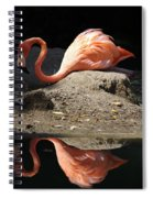 Reflections Of A Flamingo Spiral Notebook