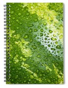 Refreshing Watermelon Spiral Notebook
