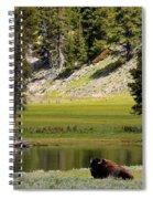 Resting Buffalo By Pond Spiral Notebook