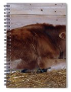Resting Calf Spiral Notebook
