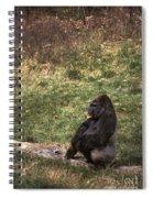 Resting Silver-back Spiral Notebook
