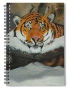 Resting Tiger Spiral Notebook