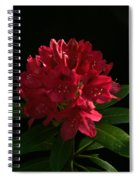 Rhododendron At Sunset 2 Spiral Notebook