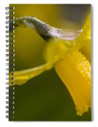 Rhododendrons, Close-up Spiral Notebook