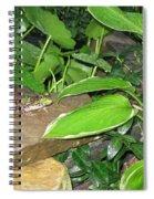 Ribbit  Spiral Notebook