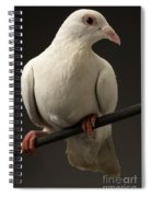 Ring-necked Dove Spiral Notebook