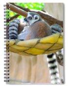 Ring-tailed Lemur Spiral Notebook