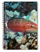 Ringtail Wrasse Spiral Notebook