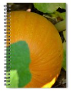 Ripe On The Vine Spiral Notebook