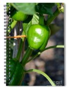 Ripened Peppers Spiral Notebook