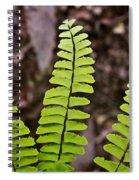 Rising Fern 1 Spiral Notebook