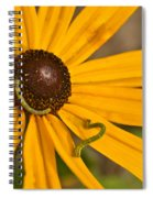 Roadside Daisy And Inch Worms Spiral Notebook