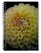 Robin Hood Yellow Spiral Notebook