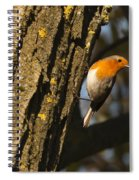 Robin On Tree Spiral Notebook