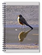 Robin Reflection Spiral Notebook