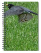 Robin With A Low Level Approach Spiral Notebook