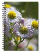 Robin's Plantain - Alabama Wildflowers Spiral Notebook