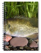 Rock Bass Spiral Notebook