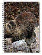 Rocky Spiral Notebook